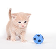 Kitten playing soccer Stock Photography