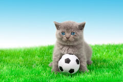 Kitten playing soccer Royalty Free Stock Photos