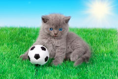 Kitten playing soccer Stock Image