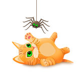 Kitten playing with spider. royalty free stock photography