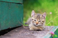 Kitten playing with a stick Stock Image