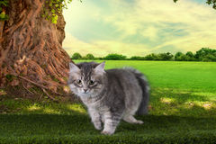 Kitten playing in a summer sunny day on the grass Stock Images