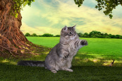 Kitten playing in a summer sunny day on the grass under the old Stock Images