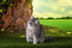 Kitten playing in a summer sunny day on the grass under the old Royalty Free Stock Image