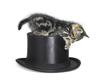 Kitten playing on top hat Stock Image