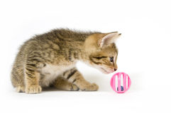 Kitten playing with toy Stock Photography