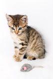 Kitten playing with a toy mouse Royalty Free Stock Photography