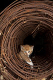 Kitten looking out of wire tunnel Stock Images