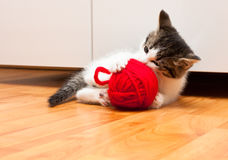 Kitten playing Royalty Free Stock Image