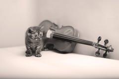 Kitten playing at the violin. British Shorthair kitten playing at the violin Royalty Free Stock Images