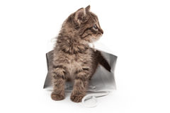 Kitten playing with white paper Stock Photography