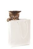 Kitten playing with white paper Royalty Free Stock Image