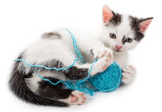 Kitten Playing With Yarn Ball Stock Photos