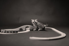 Kitten playing with a wooden train Royalty Free Stock Photo