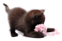 Kitten playing with a wool ball Royalty Free Stock Images