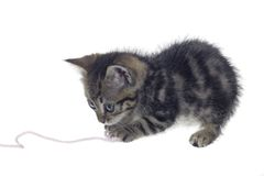 Kitten playing with woolen twine Stock Photo