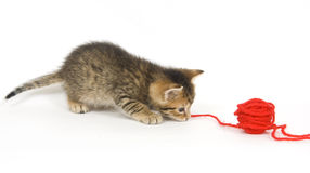 Kitten playing with yarn Stock Photo