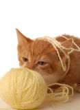 Kitten playing with yarn Stock Photos