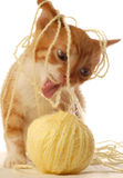 Kitten playing with yarn. Funny picture of an orange and white kitten spitten out yellow yarn Royalty Free Stock Photos