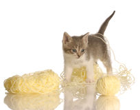 Kitten playing with yarn Stock Image