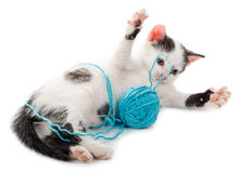 Kitten playing with yarn ball Royalty Free Stock Photo