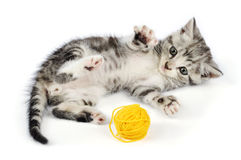 Kitten playing with yellow clew Stock Photos