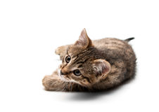 Kitten plays Royalty Free Stock Photos