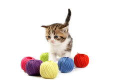 The kitten plays Royalty Free Stock Images