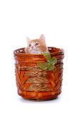 Kitten plays in a basket Stock Photo