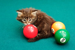 Kitten plays on a billiard table Royalty Free Stock Photography