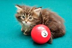 Kitten plays on a billiard table Royalty Free Stock Photos