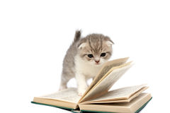 Kitten plays with the book Stock Photos