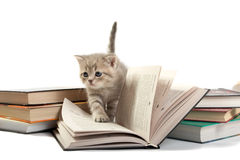 Kitten plays with the book. The kitten plays with the book Royalty Free Stock Photo