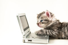 Kitten plays gameboy royalty free stock photos