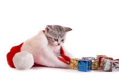 The kitten plays with gifts Stock Photo