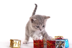 The kitten plays with gifts Stock Photography