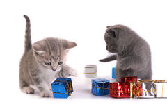 The kitten plays with gifts Stock Photos