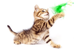 Kitten plays with a green feather Stock Photography