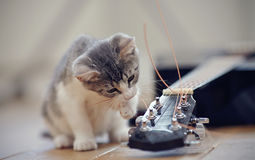 The kitten plays with a guitar string. The curious kitten plays with a guitar string stock images