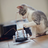 The kitten plays with a guitar string. The curious kitten plays with a guitar string royalty free stock photography