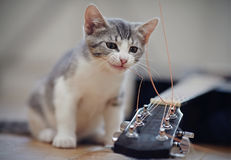 The kitten plays with a guitar string. The curious kitten plays with a guitar string stock image