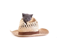 Kitten plays with a hat Royalty Free Stock Image