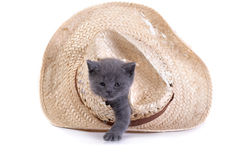 Kitten plays with a hat Royalty Free Stock Photos