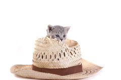 Kitten plays with a hat Stock Photography