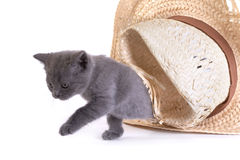 Kitten plays with a hat Stock Photos