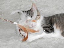Kitten Plays med fjäderleksaken royaltyfria bilder