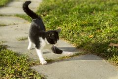 The kitten plays in the open air Stock Image
