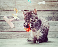 Kitten plays with paper bow Stock Image