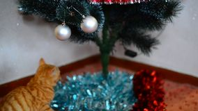 Kitten plays with toys on Christmas tree