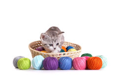 Kitten plays on a white background Royalty Free Stock Photo